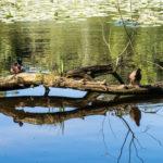 finkenmoor 7 150x150 - Finkenmoor Sahlenburg im Wernerwald Sahlenburg [ Bilder ]