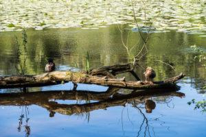 Finkenmoor Teich Sahlenburg im Wernerwald Sahlenburg [ Bilder ]