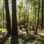 wernerwald 22 150x150 - Finkenmoor Sahlenburg im Wernerwald Sahlenburg [ Bilder ]