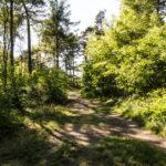 wernerwald 28 150x150 - Finkenmoor Sahlenburg im Wernerwald Sahlenburg [ Bilder ]