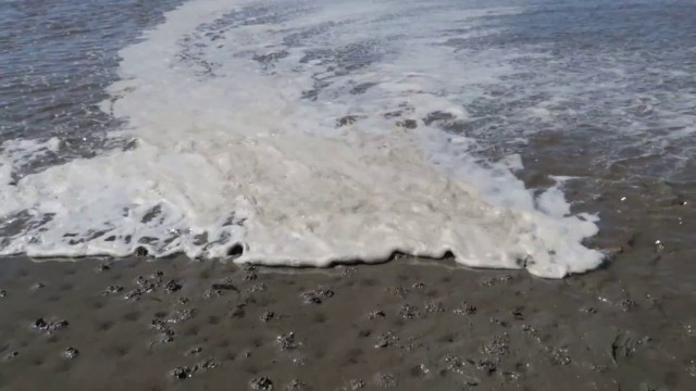 ebbe und flut nordsee - Marienkäferplage Nordsee | Marienkäfer an der Kugelbake