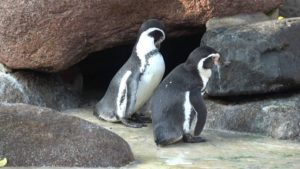 Zoo Cuxhaven – Pinguine im Zoo im Kurpark Cuxhaven