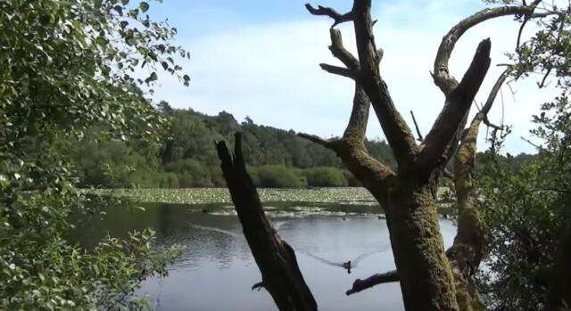 Finkenmoor im Wernerwald in Cuxhaven Sahlenburg 1 - Wernerwald und das Finkenmoor an der Küstenheide in Cuxhaven [ Video ]