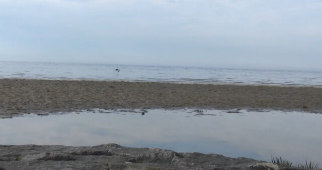 Gezeiten Ebb und Flut 9 - Ebbe und Flut Nordsee in Cuxhaven-Duhnen   Gezeiten der Nordsee [ Video ]