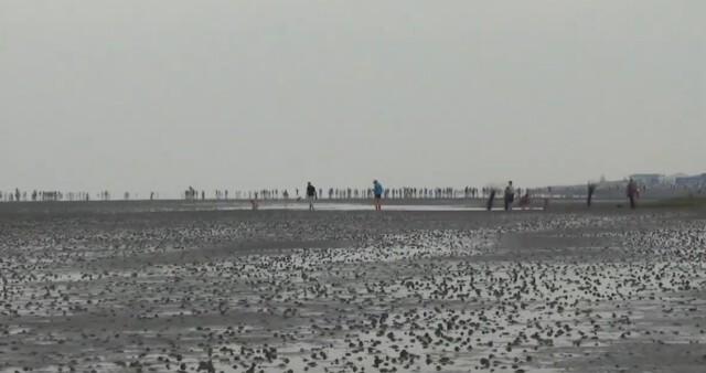cuxhaven tourismus 6 - Cuxhaven Watt im Nordseeheilbad Cuxhaven [ Video ]