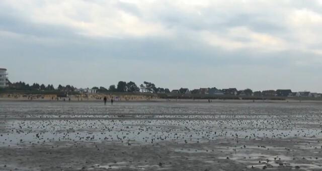 cuxhaven tourismus 7 - Cuxhaven Watt im Nordseeheilbad Cuxhaven [ Video ]