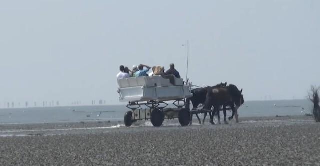 1 W Wagenfahrt zur Insel Neuwerk sollte eigentlich jeder Urlauber mitmachen  - Wattwagen Duhnen - Wattwagenfahrt von Cuxhaven nach Neuwerk [ Video ]