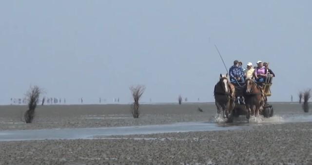 Watt Wagenfahrt im Sommer  - Wattwagen Duhnen - Wattwagenfahrt von Cuxhaven nach Neuwerk [ Video ]