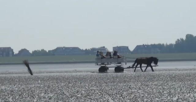 Wattwagen fahren von Bohnen nach Neuwerk  - Wattwagen Duhnen - Wattwagenfahrt von Cuxhaven nach Neuwerk [ Video ]