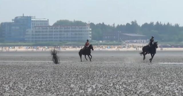 Zwei Reiter im Watt  - Wattwagen Duhnen - Wattwagenfahrt von Cuxhaven nach Neuwerk [ Video ]