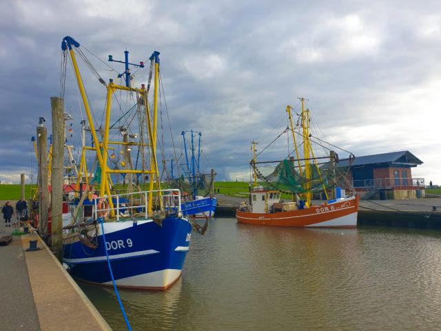 Krabbenfischer im Hafen von Dorum 4 - Sielhafen in Dorum-Neufeld - Yachthafen an der Wurster Nordseeküste
