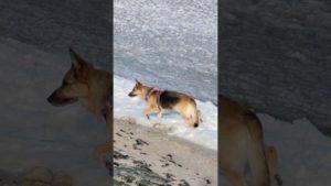 Eis Cuxhaven – Hund auf Eis am Meer in der Grimmershörnbucht