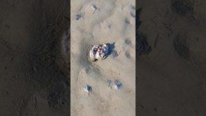 Austern in der Nordsee