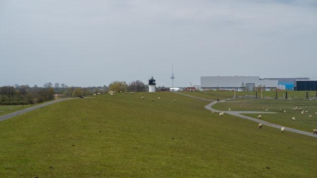 Deichschafe auf dem Deich in Cuxhaven-Altenbruch